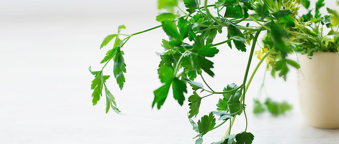 Fines herbes et jardin – Quoi choisir ?
